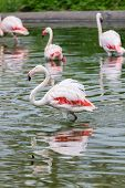 pic of long-legged-birds  - Perfect birds in water outdoors in nature - JPG