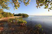 Mangroves in the Atlantic Ocean. Cayo Guillermo. Cuba.