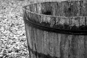 Wooden Barrel To Harvest Grapes During The Harvest