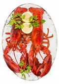 picture of lobster  - Two lobsters ready to eat isolated on a white background - JPG