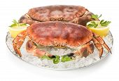 image of cooked crab  - Two crabs ready to eat isolated on a white background - JPG