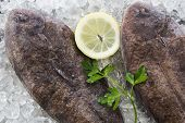 image of soles  - Dover Sole on ice with sliced lemon and parsley - JPG