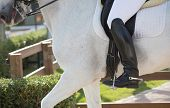 foto of saddle-horse  - Closeups of a competition of dressage horses in Spain - JPG