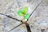 stock photo of decomposition  - Seedling growing in a timber Focus on seeding - JPG