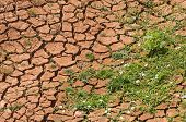stock photo of water shortage  - Image of Arid land with green plant - JPG