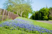 foto of texas  - Texas bluebonnets framing a rural Texas Road  - JPG