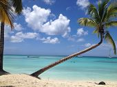 image of caribbean  - Palm tree bends over caribbean beach on Isla Saona - JPG