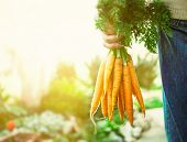 pic of carrot  - Organic vegetables - JPG