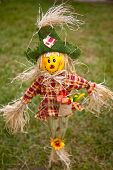 pic of rag-doll  - Close up of a rag doll grass bakground - JPG