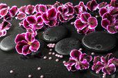 picture of geranium  - beautiful spa still life of blooming dark purple geranium flower and beads on reflection dark water closeup - JPG