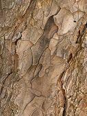Tallulah State Park  Tree Bark