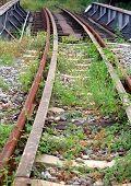 Overgrown Railroad Tracks