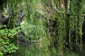 image of weeping  - Weeping willow branches hanging over a water canal with a bridge in the background in Tongli Town in Jiangsu province China - JPG