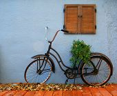 an old bicycle with a plant on it