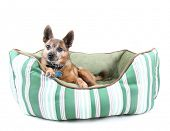 dog laying in a cute pet bed
