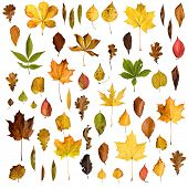 Isolated autumn leaves collection