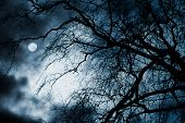 image of tragic  - Scary dark scenery with naked trees - JPG