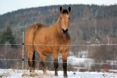 pic of shire horse  - Horse in a cold winter pasture - JPG