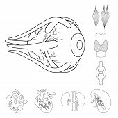 Vector Design Of Anatomy And Organ Symbol. Collection Of Anatomy And Medical Vector Icon For Stock. poster