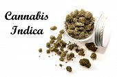 Cannabis. Marijuana. Marijuana buds for sale. Cannabis Indica. Isolated on white. Room for text. Pot poster