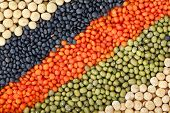 picture of legume  - colorful striped rows of lentils - JPG
