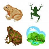Vector Illustration Of Frog And Anuran Sign. Collection Of Frog And Animal Stock Symbol For Web. poster
