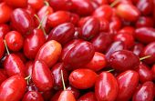 Fresh Cornelian Cherries