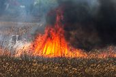 Raging Forest Spring Fires. Burning Dry Grass, Reed Along Lake. Grass Is Burning In Meadow. Ecologic poster