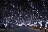 image of christmas lights  - Christmas lights on the trees - JPG