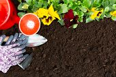 Gardening Tools On Soil Background. Planting Spring Pansy Flower In Garden. Spring Garden Work Conce poster