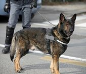 Dog Canine Unit Of The Police And A Policeman  In Uniform poster