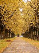 schöne Allee im Herbst