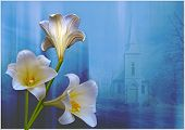 Lilies and Church