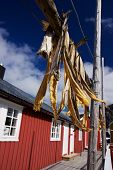 Dried Stockfish On Lofoten