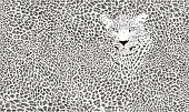 Jaguar skin background