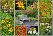 Summer Garden Collage