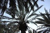 Palm in the sky