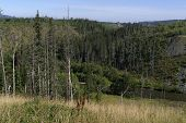 picture of sakhalin  - coniferous forest on the bank of the river in the mountains - JPG