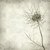 Textured Old Paper Background With Nigella