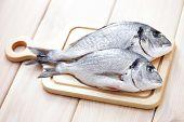 dorada fresco pescado - comida y bebida