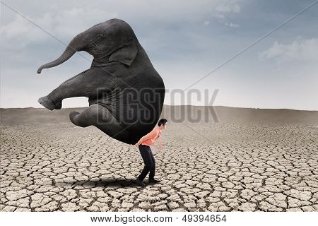 Business Leader Carry Elephant On Dry Ground poster