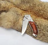 Conocimiento superficial de cuchillo y animal