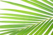 Close-ups Palm-leaf,