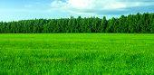Fresh Green Grass