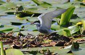 Wild Bird On The Nest