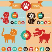 picture of domestic cat  - Vector set of infographics design elements  - JPG