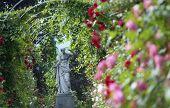 Under Rose Arches