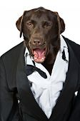 Op Dog In Tuxedo Shouting His Orders