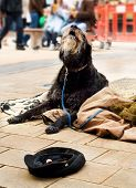 Homeless Dog Begging