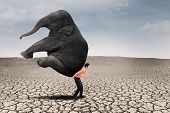 stock photo of domination  - Businessman lifting big elephant on dry ground  - JPG